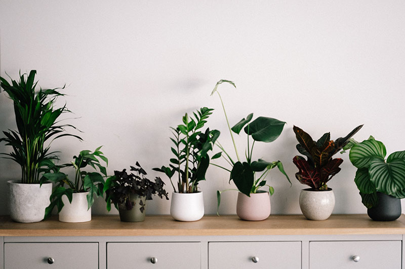 house plants reducing indoor air pollution